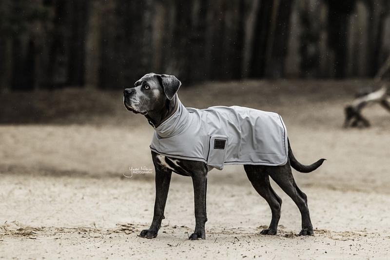 Kentucky Dog Raincoat