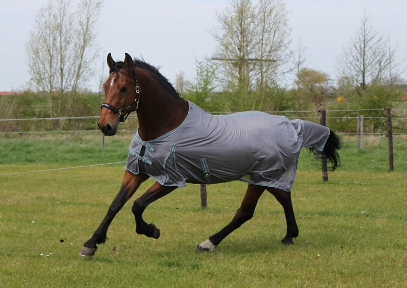 DKR Sports Fly Rug Essentials