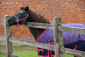 DKR Sports Mini Deluxe Winter rug 150grs specially for pony's